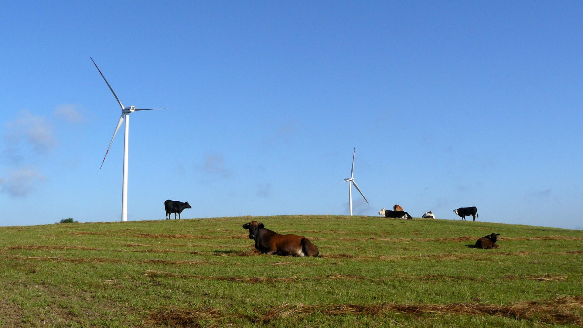 Vortex Energy Polska - Park wiatrowy Inowrocław
